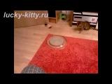 Лучшая в мире игрушка для кошек